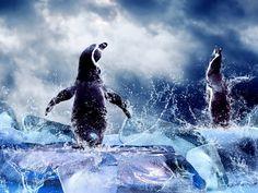 Magellanic Penguins Ice Dance