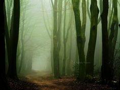 Forest by Nelleke on deviantART