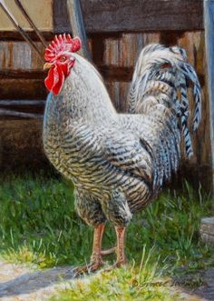 Birds Paintings for sale, buy Birds Paintings, Page 3 Chicken Painting, Chicken Art, Animal Paintings, Paintings For Sale, Fish Paintings, Original Paintings, Plymouth Rock Chicken, Chicken And Cow, Beautiful Chickens