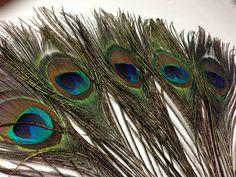 5 x Peacock LARGE EYE Beautiful feathers 27-35cm craft/millinery/vase/Costume