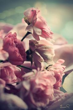 """""""Sache que la fleur la plus belle est aussi la plus tôt fanée. Sur son parfum penche-toi vite. L'immortelle n'a pas d'odeur."""" André Gide"""