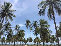 Alagoas: Rota Ecológica da Costa dos Corais (Parte 1) | Na Mochila da Ninja