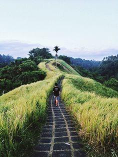 Campuhan hill, Ubud, Bali-Indonesia