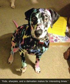 Colorful dalmation..:)
