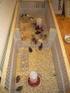 Cheap, easy brooder for you baby chicks - Homesteading Today Keeping Chickens, Raising Chickens, Backyard Farming, Chickens Backyard, Duck Coop, Chicken Coop Plans, Chicken Coops, Chicken Garden, Baby Chickens