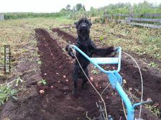 This is Dog. I farm potatoes.