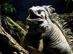 Photo du GEOnaute : guilaume76 Trouvez la meilleure assurance pour votre animal de compagnie grâce à ce comparateur en ligne