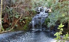circles in the forest walk - Google Search Circles, Waterfall, Walking, African, Activities, Google Search, Garden, Outdoor, Outdoors