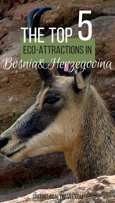 Here are our top five eco attractions in Bosnia and Herzegovina! | Kravice Waterfalls | Hutovo Blato National Park | Vrelo Bune | Vjetrenica Caves | Sutjeska National Park |
