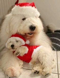 Boots and Buster is getting ready for Christmas 2015....in fact they have a calendar you can get on FB on their page. The pics are adorable--they are brothers--well you know what I mean.