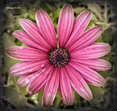 Momentsbook.com: Μαντάλα στο χρώμα της ηρεμίας και του διαλογισμού!...