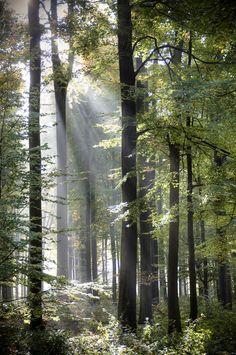 Forest of Light by Alain et Nadine