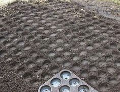 Use muffin tin to create perfectly spaced holes for seedlings... B.V.