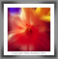 Back yard flowers by Nikki Rinderer