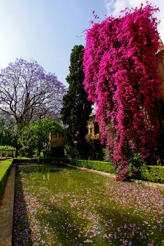 Gardens of the Reales Alcázares in Seville, Spain
