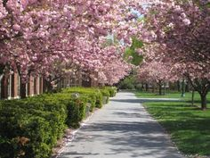 Bucknell quad in the spring