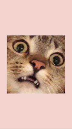 - – Esthetic wallpapers images – Samsung wallpapers im - Cartoon Wallpaper, Iphone Wallpaper Cat, Tier Wallpaper, Cute Cat Wallpaper, Mood Wallpaper, Iphone Background Wallpaper, Aesthetic Pastel Wallpaper, Animal Wallpaper, Art Background