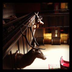 Photo by sean_duffy Dublin Hotels, Duffy, Castle, Horses, Instagram Posts, Castles, Horse