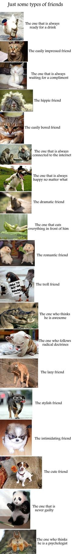 Types of friends in terms of cute animals