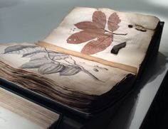 A Mine of Information- how Mark Spencer describes Specimens at Natural History Museum Herbarium. Plantheritage.wordpress.com