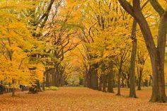 A cores do outono no Hemisfério Norte