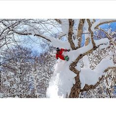 KC Deane skiing at the Myoko Akakura Ski Area, Niigata, Japan Ski And Snowboard, Snowboarding, Skiing, Snow Activities, I Love Winter, Scary Places, Days Like This, Extreme Sports, December