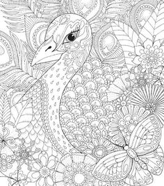 A peacock found in a Jungle Safari Peacock Coloring Pages, Detailed Coloring Pages, Printable Adult Coloring Pages, Cute Coloring Pages, Animal Coloring Pages, Coloring Pages To Print, Coloring For Kids, Coloring Sheets, Coloring Books