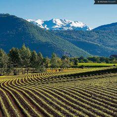 """Sei pronto a scoprire #UnLagodiVino? È dove il #lagodiseo incontra i vini di #Franciacorta e #Valcalepio! Sabato 6 e domenica 7 maggio torna a #Sarnico la due giorni dedicata agli #WineLovers. Se anche tu fai piacevolmente parte della """"categoria"""" l'occasione è da non perdere e scopri come partecipare qui: http://ift.tt/2qr5SHM  Foto: @michelerossettiphotography  #visitlakeiseo #inlombardia #italiait #ilikeitaly #laghilombardi #laghiitaliani #lago #inlombardia #iseolake #inlombardia365…"""