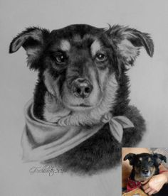 Dog Art, Horse Art & Other Pet Portraits Sketched By Hand in Graphite Pencil Done Working From Your Photos by Pet Artist Genevieve Schlueter. Portrait Sketches, Drawing Sketches, Dog Drawings, Hand Sketch, Dog Illustration, Horse Art, Pencil Art, Dog Art, Pet Portraits