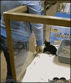 Smart cat... finding a way to get out of the pen and who knows the girl's mother can't say no to the daughter.