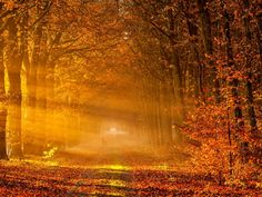 Fall, autumn, leaves, trees, September, October, November, nature, path, yellow, sunbeam