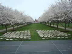 Seating for the Philadelphia's Cherry Blossom Festival