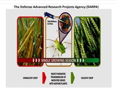 Targeted gene therapy    https://rosecoveredglasses.wordpress.com/2016/11/03/enlisting-insects-to-protect-agricultural-crops/