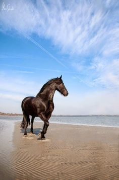 Breathtaking horse in water on the beach.! You can see the ripples in the sand. And look at that awesome blue sky!