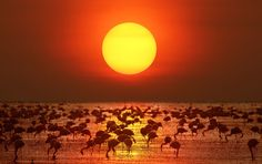 Lake Nakuru Kenya -     Big Sunset & Flamingo (by Prasit_C)
