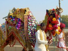 "Camel Festival of Bikaner (India): ""Your Chance To Do The Hump"""