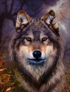 Wolf Solar t shirt indoor outdoor color changing just add sun youth Wolf Photos, Wolf Pictures, Wolf Love, Beautiful Wolves, Animals Beautiful, Tier Wolf, Wolf Craft, Cute Wolf Drawings, Native American Wolf