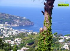 Escursioni a Ischia: il sentiero dell'Allume | Cosa fare e vedere a Ischia – Ischia.Land