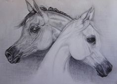 """Head Study 60 x 45 graphite on paper - Collection """" Alwaab Stud Jewels"""" November 2012"""