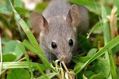 Keep Mice Away From Your Bird Feeders