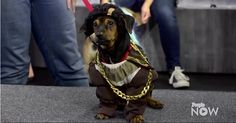 6 Dogs Dressed As Their Fav Celeb For Halloween – Vote On Who Wears It Best!