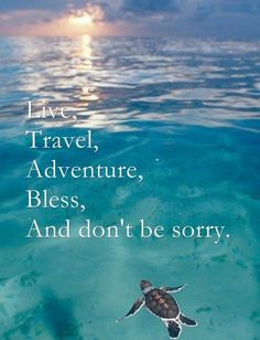 Live ... And don't be sorry #travel #quotes