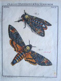 Antique deaths head moth print