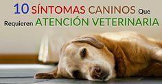 Hay ciertos síntomas caninos que nunca deberías ignorar, o esperar a ver qué pasa. http://mascotas.mercola.com/sitios/mascotas/archivo/2015/06/17/no-ignores-estos-10-sintomas-caninos.aspx