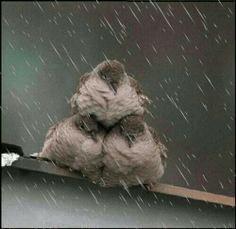 Birds in the rain..