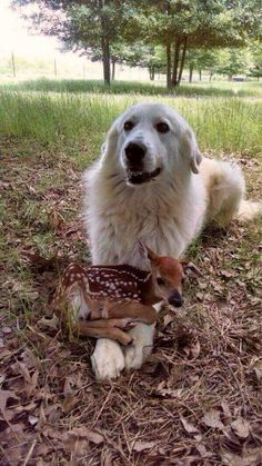 Dog with young deer on its paws