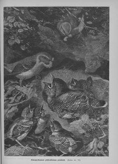 Original source:  Kyläkirjaston Kuvalehti, 01.06.1904, nro 6, s. 11 http://digi.kansalliskirjasto.fi/aikakausi/binding/870448?page=11 Kansalliskirjaston Digitoidut aineistot