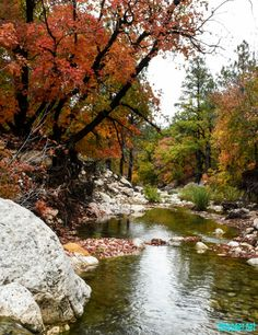 Fall leaves. McKittrick Canyon, Guadalupe Mountains National Park, Texas.