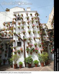 Detail of flower bedecked patio. Cordoba, Andalusia, Spain [WE044651]