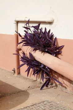 paarse blaadjes